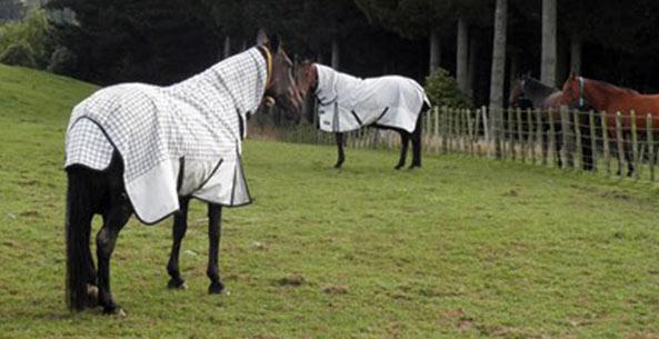 horses-vitamins